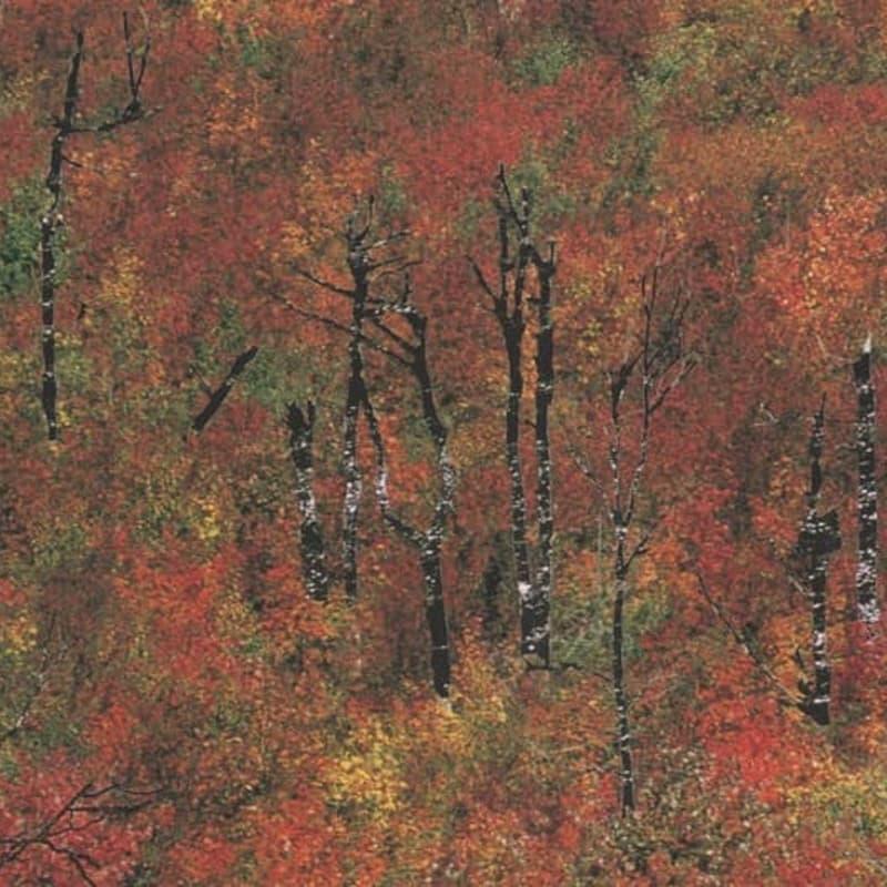 PAYNOMINDTOUS.IT Album Premiere: Lag Metamorphosis by Modo Koagon & Xtematic [Biodiversità Records] image 1